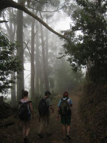 Hiking the Blue Mountains in Jamaica